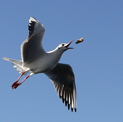 sea-gull-itzik