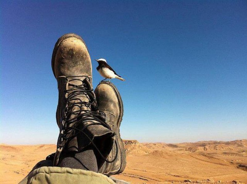 shoes-and-a-bird